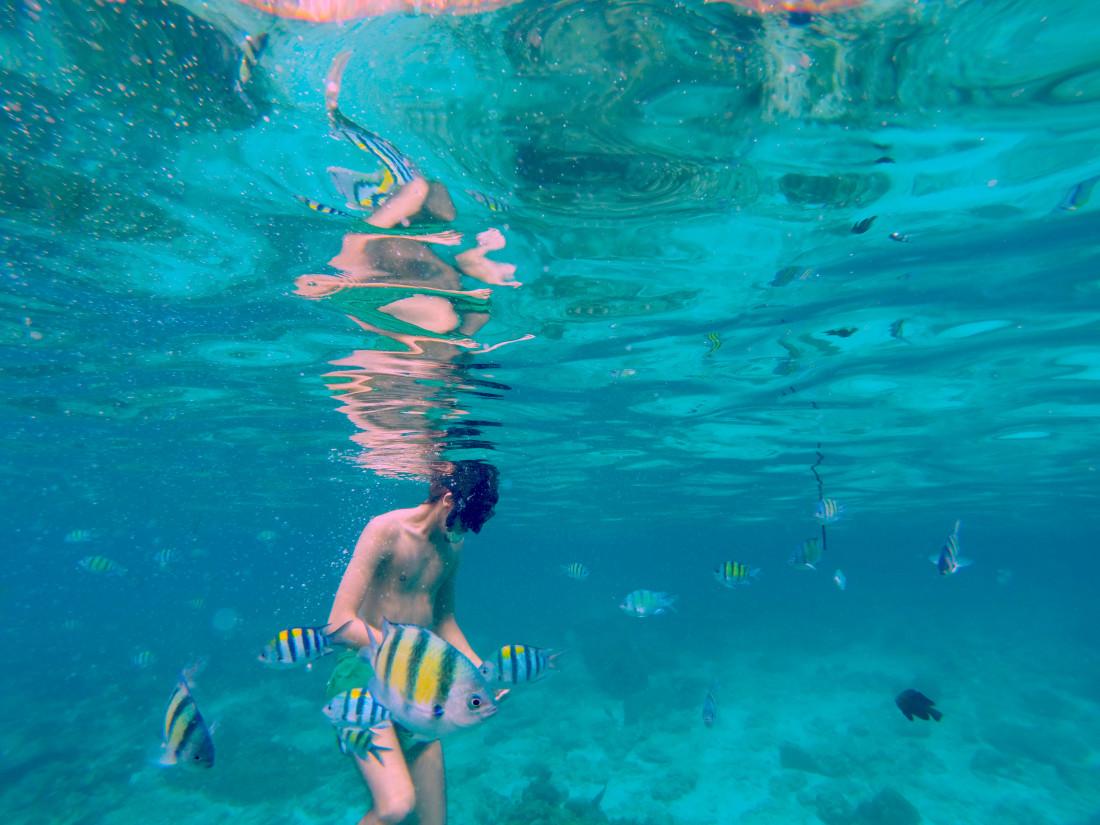 snorkeling thailand kohphiph